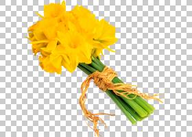 花卉剪贴画背景,植物茎,切花,植物,康乃馨,花瓣,花卉游行,黄色,水