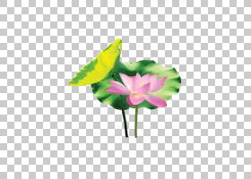 花卉剪贴画背景,植物茎,切花,绿色,花,黄色,花瓣,玫瑰家族,叶,植