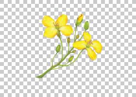 花卉剪贴画背景,植物茎,切花,花,黄色,植物群,植物,配料,挤出机压