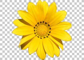 卡通向日葵,一年生植物,玛格丽特黛西,葵花籽,黛西,花瓣,向日葵,