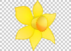花卉剪贴画背景,植物茎,切花,黄色,传粉者,花瓣,对称性,向日葵,植