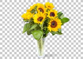 百合花卡通,一年生植物,非洲菊,雏菊家庭,插花,葵花籽,植物,向日