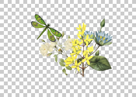 百合花卡通,分支,树,植物群,植物,水百合,Pierrejoseph Redoutxe9