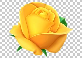 花卉剪贴画背景,橙色,花瓣,floribunda,切花,关门,玫瑰秩序,玫瑰