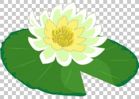 百合花卡通,水生植物,花,花瓣,向日葵,叶,植物群,植物,雏菊家庭,