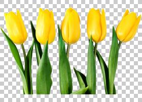 百合花卡通,番红花,百合家族,切花,花瓣,植物茎,芽,植物,花束,黄