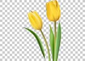 百合花卡通,种子植物,百合家族,叶,动画,芽,红色,绿色,花瓣,植物,