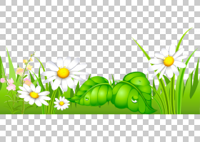 绿草背景,草,花瓣,黛西,绿色,花,黄色,草族,能源,复活节彩蛋,草甸