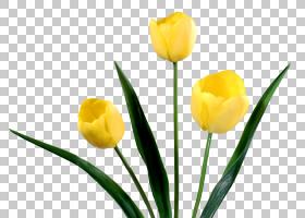 百合花卡通,花卉,植物茎,切花,种子植物,百合家族,花瓣,植物,红色