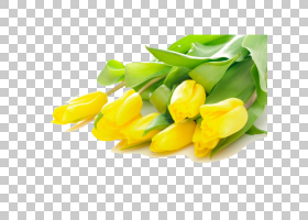 百合花卡通,花卉设计,百合家族,花瓣,植物,蓝色,玫瑰,红色,切花,