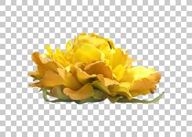 百合花卡通,黄色,水百合,花店,唐菖蒲,植物茎,莲子,睡莲,玫瑰,花