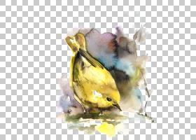 水彩卡通,羽毛,喙,静物摄影,油漆,黄色,芬奇,水彩画,美国黄莺,卡