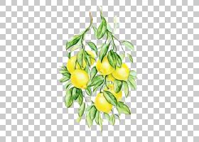 水彩花卉背景,伊兰吉兰,分支,叶,植物,花,黄色,艺术家,苹果,绘图,