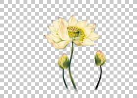 花卉剪贴画背景,花卉设计,植物茎,切花,花,黄色,静物摄影,花瓣,植