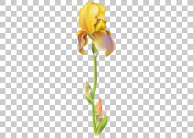 花卉剪贴画背景,花卉设计,植物茎,切花,黄色,花瓣,植物群,植物,鸢