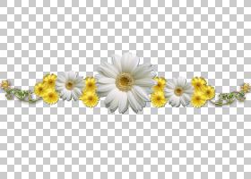 花卉剪贴画背景,花卉设计,牛眼雏菊,黄色,黛西,身体首饰,向日葵,