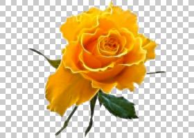 粉红色花卡通,奥地利布里亚尔,花卉,植物茎,桃子,植物,花瓣,玫瑰