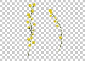 花卉剪贴画背景,花卉设计,细枝,植物茎,切花,分支,花,黄色,树,植