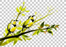 水彩花卉背景,细枝,植物茎,喙,分支,花,黄色,鸣鸟,树,芬奇,叶,植