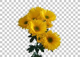 花束,插花,一年生植物,金盏花,花卉,葵花籽,向日葵,雏菊家庭,非洲