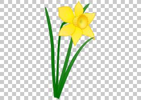 花卉剪贴画背景,花卉,线路,植物茎,切花,花卉设计,绿色,水仙,插花