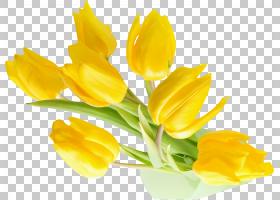 粉彩花卉背景,芽,植物茎,番红花,花瓣,植物,粉色,花卉设计,红色,