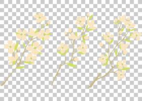 水彩花卉背景,花卉设计,细枝,植物茎,分支,黄色,植物群,花瓣,阿梅