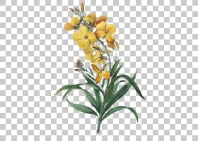 花束画,壁花,植物茎,植物群,植物,切花,绘图,打印,花束,黄色,玫瑰
