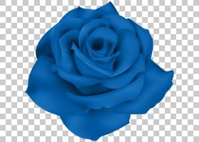 粉红色花卉背景,天蓝色,蔷薇,钴蓝,电蓝,玫瑰秩序,玫瑰家族,植物,