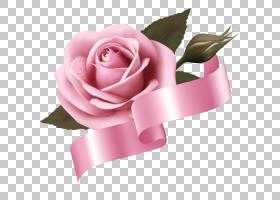 粉红色花卉背景,桃子,花卉,插花,蔷薇,植物,花瓣,玫瑰秩序,玫瑰家