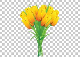 粉红色花卉背景,花卉,植物茎,橙色,切花,花卉设计,插花,花瓣,植物