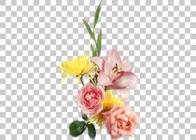 粉红色花卉背景,蔷薇,花瓣,玫瑰秩序,植物,玫瑰家族,黄色,粉红色,