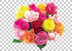 粉红色花卡通,植物,蔷薇,玫瑰秩序,花卉,插花,黄色,粉红色,玫瑰家