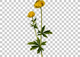 花卉剪贴画背景,芽,植物茎,切花,海葵,草本植物,坦西,黄色,花盆,
