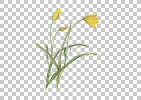 花卉剪贴画背景,草,线路,植物茎,切花,分支,黄色,花瓣,叶,植物群,