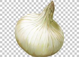 洋葱动画,配料,洋葱,食物,红洋葱,大蒜,蔬菜,黄洋葱,大象大蒜,青图片