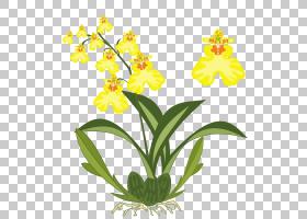 花卉剪贴画背景,草本植物,兰花,植物茎,切花,蛾兰,黄色,花盆,花瓣