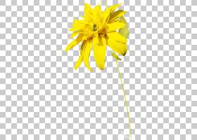 花卉剪贴画背景,葵花籽,雏菊家庭,植物,向日葵,RAR,植物茎,花瓣,