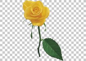 花卉剪贴画背景,蔷薇,玫瑰秩序,植物,玫瑰家族,玫瑰,植物茎,切花,
