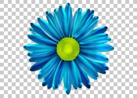 花卉剪贴画背景,非洲菊,黛西,绿色,雏菊家庭,紫菀,切花,花瓣,对称