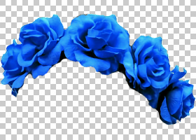 族的图形,植物,电蓝,花瓣,蓝玫瑰,玫瑰秩序,玫瑰家族,切花,玫瑰,