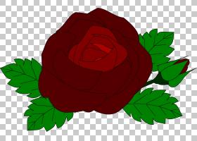 族的图形,红色,花瓣,种子植物,植物群,玫瑰秩序,玫瑰家族,叶,植物