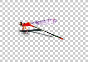 昆虫滑雪杆,机翼,线路,体育器材,滑雪杆,蜻蜓,昆虫,图片