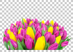 春花,花卉,花卉设计,洋红色,切花,种子植物,关门,番红花,黄色,百