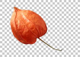桃花,桃子,水果,花,红色,灯笼,橙色,图片
