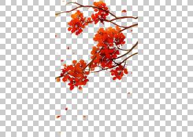 水彩花卉背景,水果,植物茎,植物,花瓣,细枝,橙色,植物群,树,罗文,