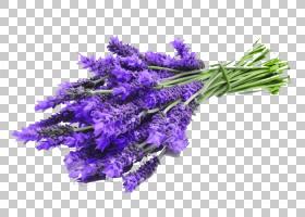 花卉剪贴画背景,人造花,切花,植物,紫罗兰,紫色,花,薰衣草,花香,
