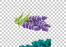 花卉剪贴画背景,切花,丁香,花,紫色,紫罗兰,薰衣草,植物,草药蒸馏