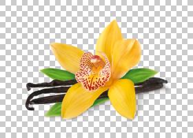花卉剪贴画背景,切花,黄色,花瓣,花,植物,香草兰,巧克力,花生酱,