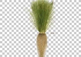 草背景,商品,[医]泽兰草(Chrysopogon Zizanioides),花盆,草族,草
